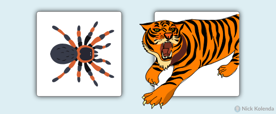 Spider and tiger