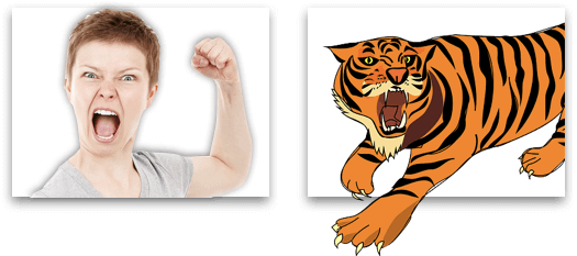 Picture of angry person and picture of tiger